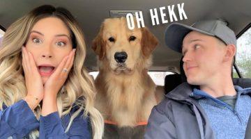 My Dog Reacts to Car Wash
