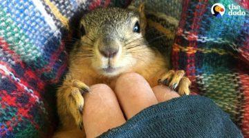 Rescue Squirrel Asks His Parents to Adopt Him