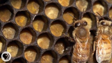 Did You Know Honey Bees Also Make Bread?