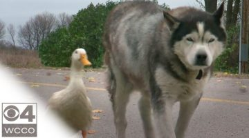 The Unlikely Friendship Of Max And Quackers