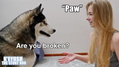 Asking For My Dog's Paw Too Many Times!