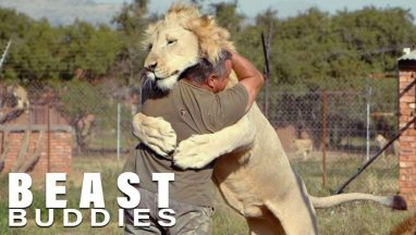 The Man Who Cuddles Lions