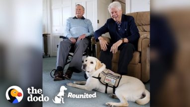 Former President's Service Dog Is SO Excited To See His Mom