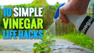10 Simple Useful Vinegar Tips