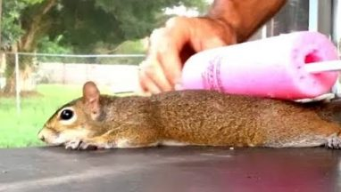 Making A Squirrel Pancake