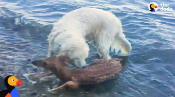 Animals Rescue Other Animals In Need