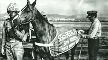 Staff Sergeant Reckless – Marine Corps War Horse – Hero